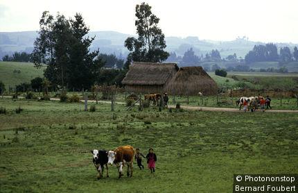 Chili, Temuco, indiens Mapuches et vaches dans paysage agricole