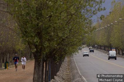 Argentina, Mendoza, Mendoza, Trees in San Martin park.