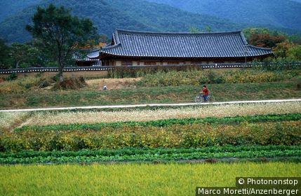 rice pad and Folk Village, Andong, South Korea