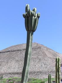 Cactus et pyramide du Soleil