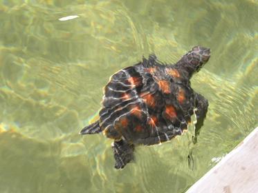 Kosgoda Turtle farms