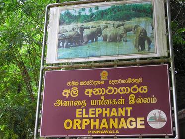 Pinnewala Elephant Orphanage
