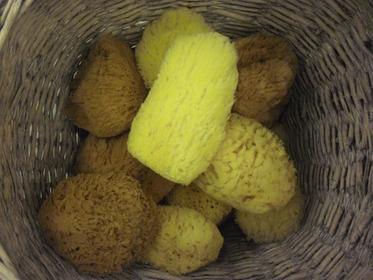Greek sea sponges