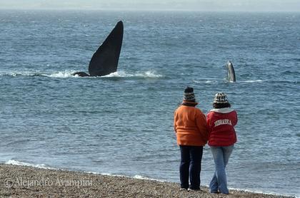 El Doradillo WhaleWatching