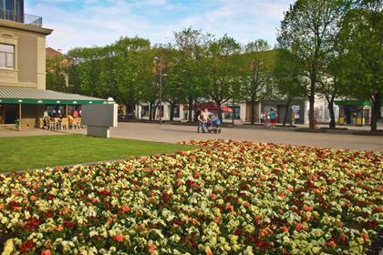 Kaunas' flowers