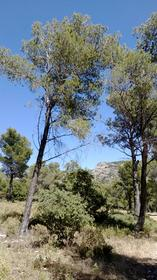 chemin du Leberon