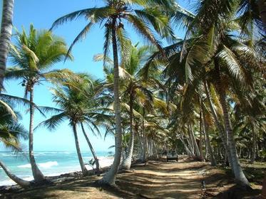 Coconut coast