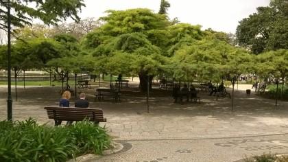 Le cèdre remarquable du parc
