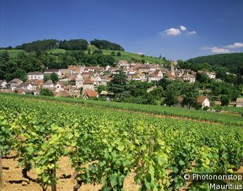 The Burgundy Côte