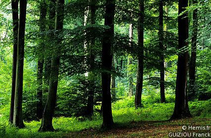 Forêt de Retz