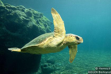 Kélonia Sea Turtle Observatory