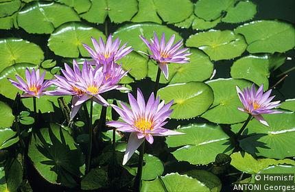 Deshaies Botanical Garden