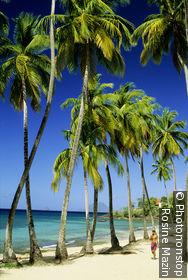 Anse Figuier beach