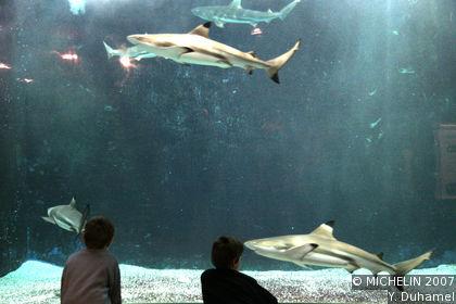 Aquarium of Liège