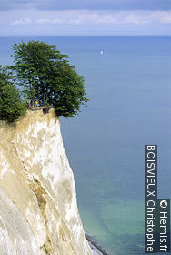 Mons Klint (cliffs)