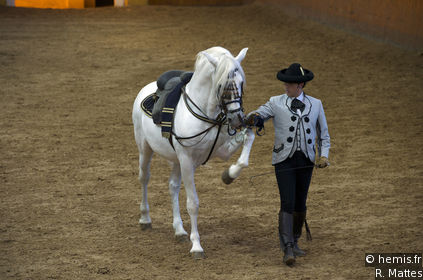 The Royal Andalucian School of Equestrian Art