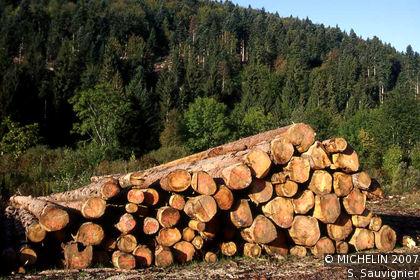 Forêt de la Joux