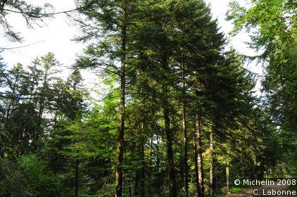 Forêt du Crêt du Maure