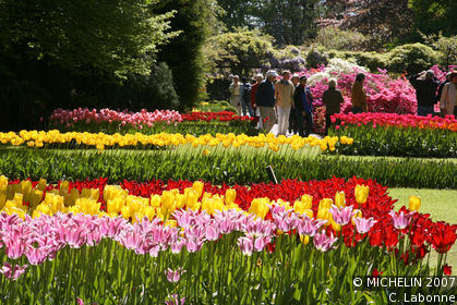Fields of flowers at Keukenhof