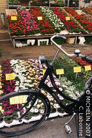 Flower Market (Bloemenmarkt)