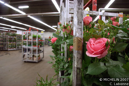 Bloemenveiling Aalsmeer