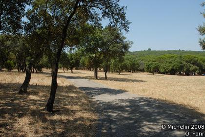 Florestal de Monsanto Park