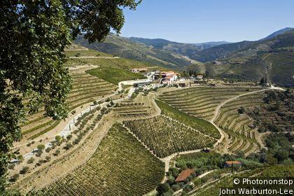 Porto Vineyards Route