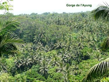 Ayung Gorge