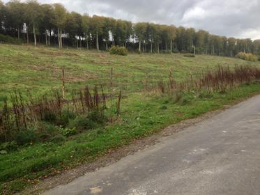 Forêt d'Eawy - Rue de la Plaine