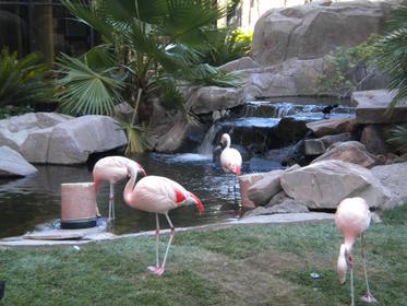 Jardins du Flamingo