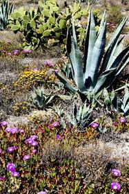 Cabo de Gata Flore
