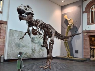 Senckenberg Natural History Museum