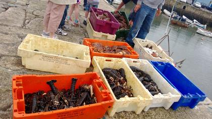 Seafood at Dalkey