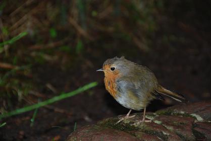 Robin, my friend