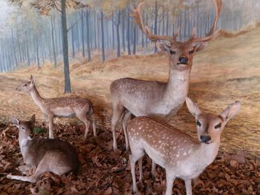 Budapest - Hungarian Agriculture Museum - deer