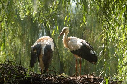 Stork and Otter Protection Centre