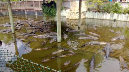 Aligators... And many.