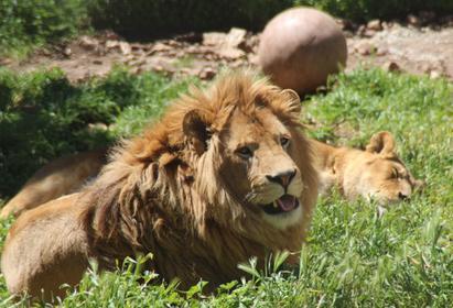 Mont Faron Zoo