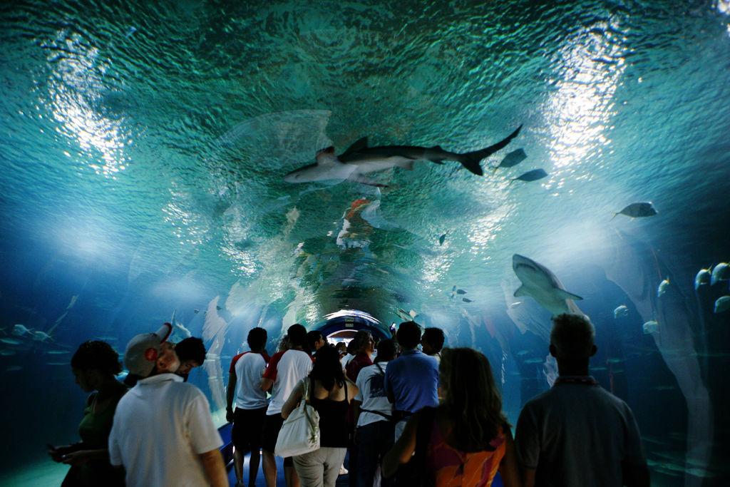 Oceanogr fic turismo valenza viamichelin for Oceanografic telefono