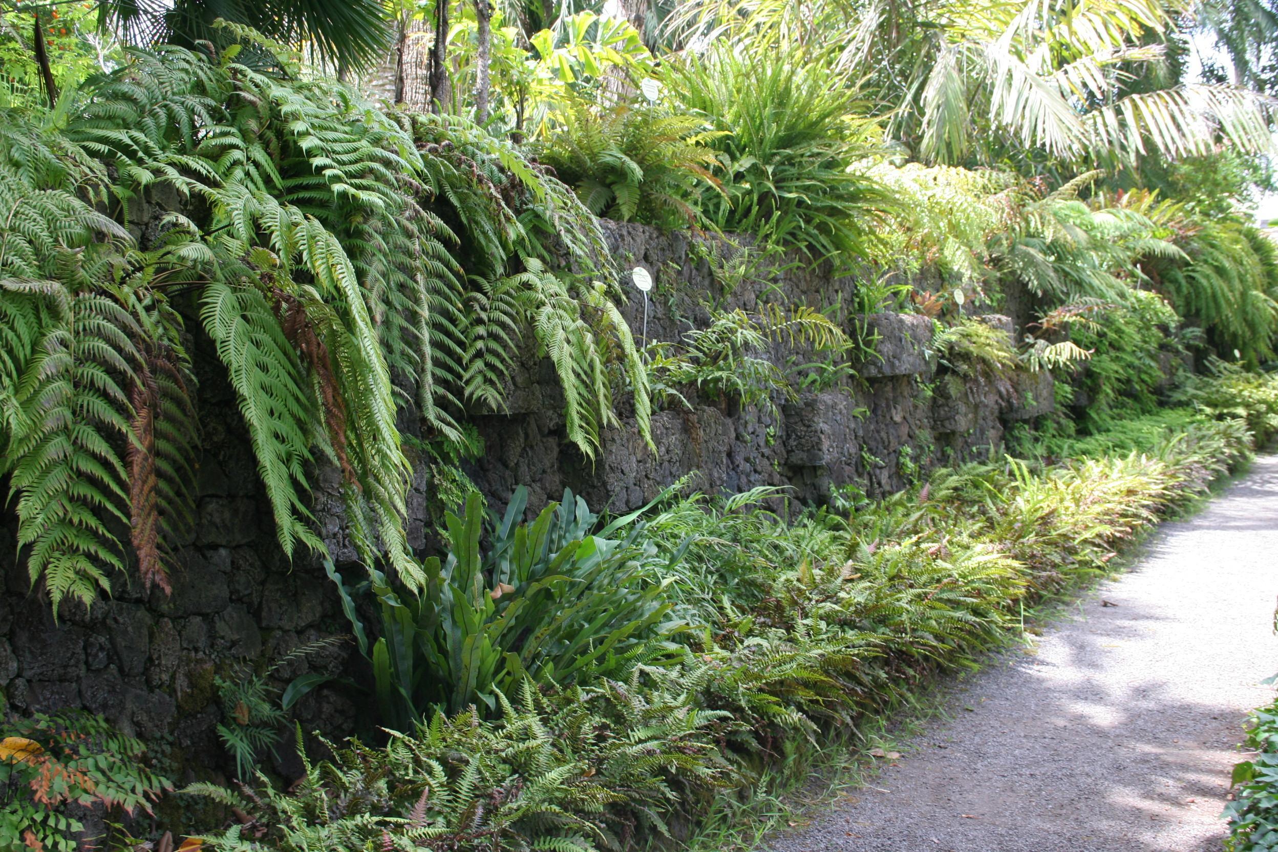 Orto botanico di la orotava jardin de aclimataci n for Jardin botanico numero telefonico